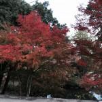 成相寺-06