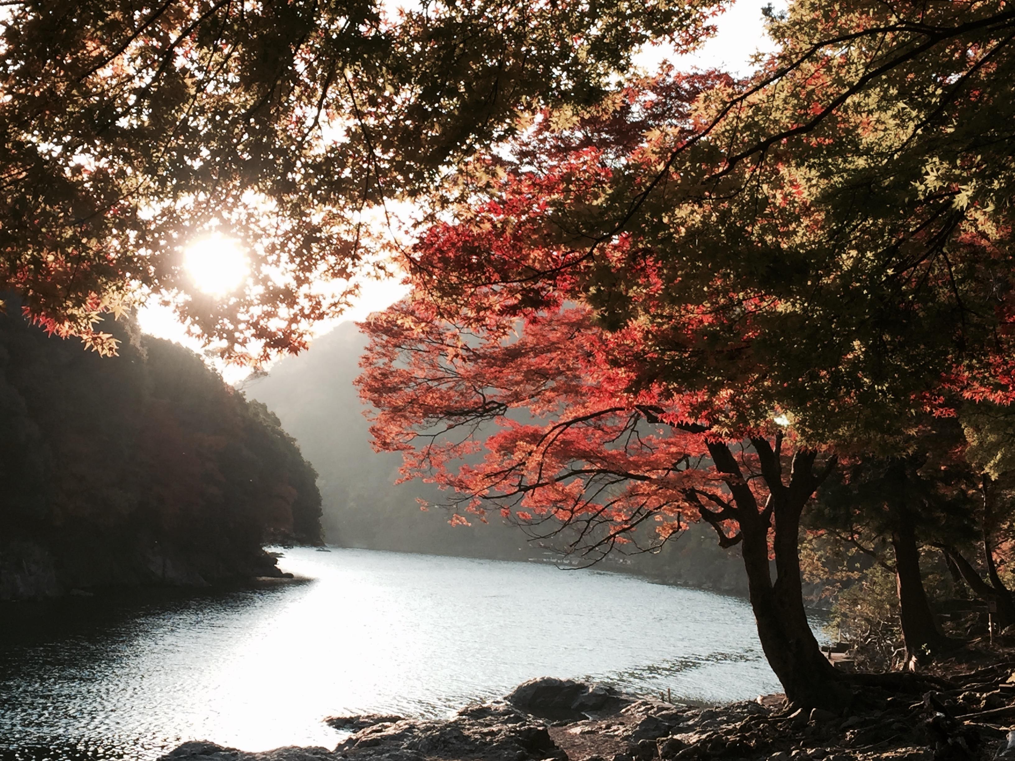 セローでツーリング 嵐山から奥琵琶湖