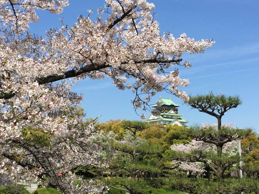 大阪城の桜_009