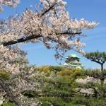 セローでお散歩 大阪城の桜