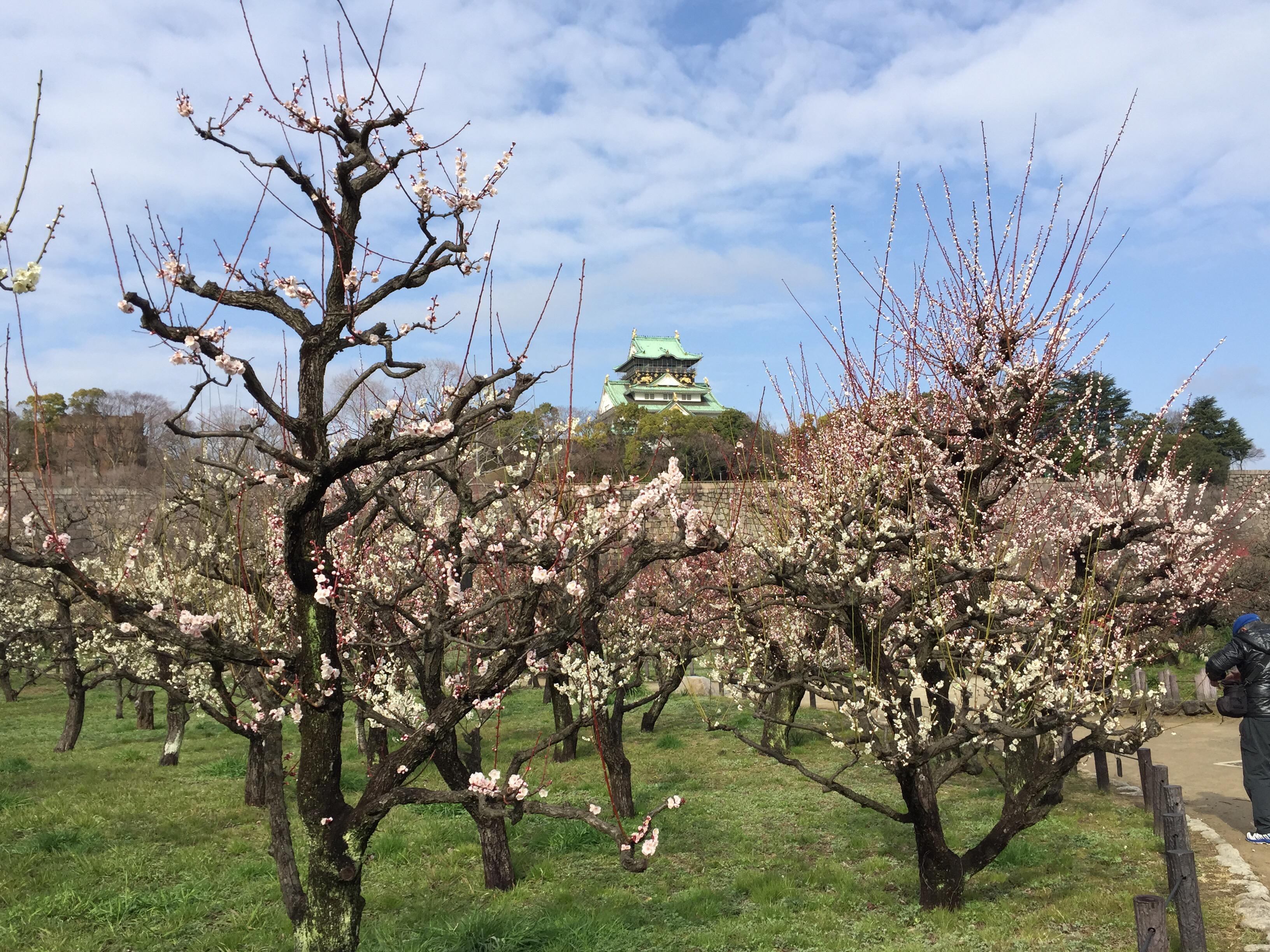 セローでツーリング 大阪の梅