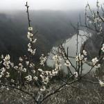 セローでツーリング 奈良と三重(津)の梅