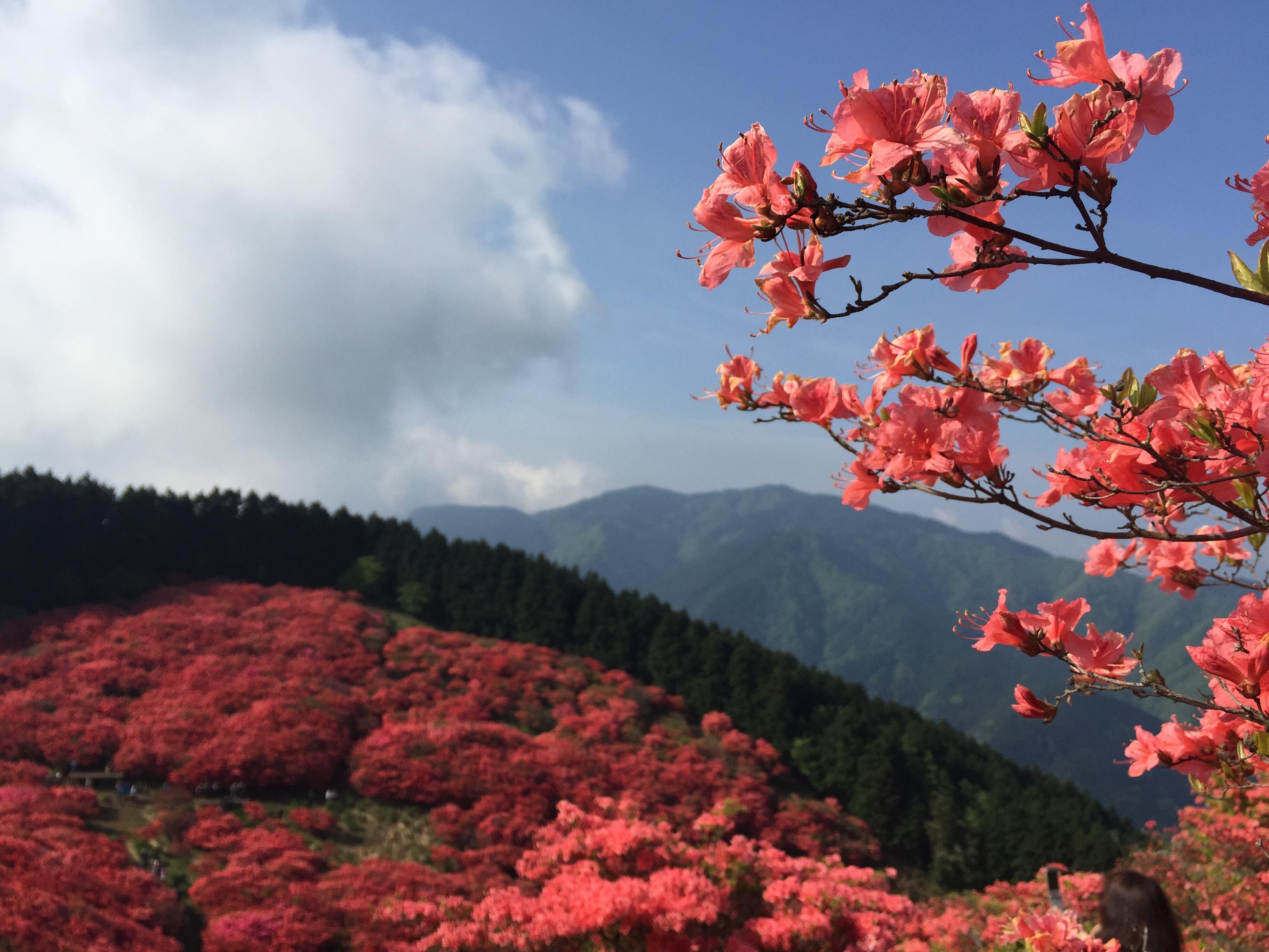 セローでお散歩 奈良葛城山のツツジ