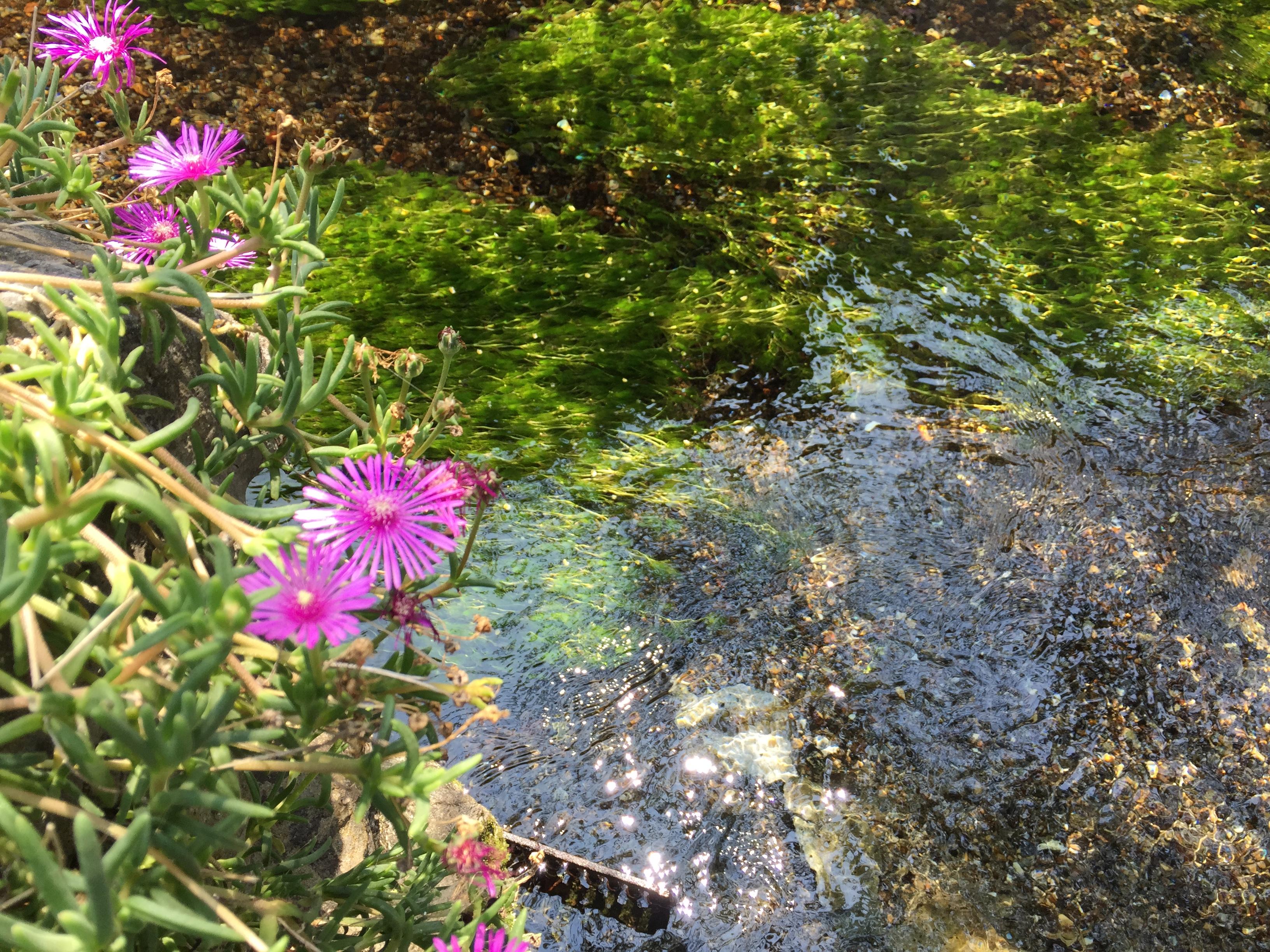 セローでツーリング 滋賀の蓮と梅花藻