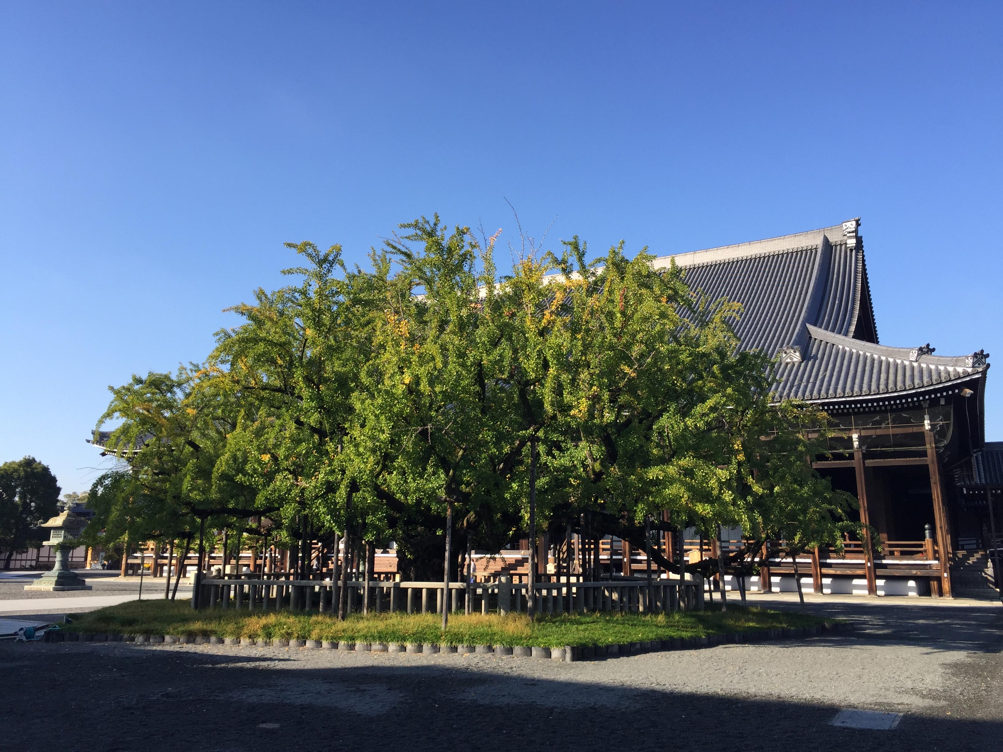 セローでお散歩 京北の秋