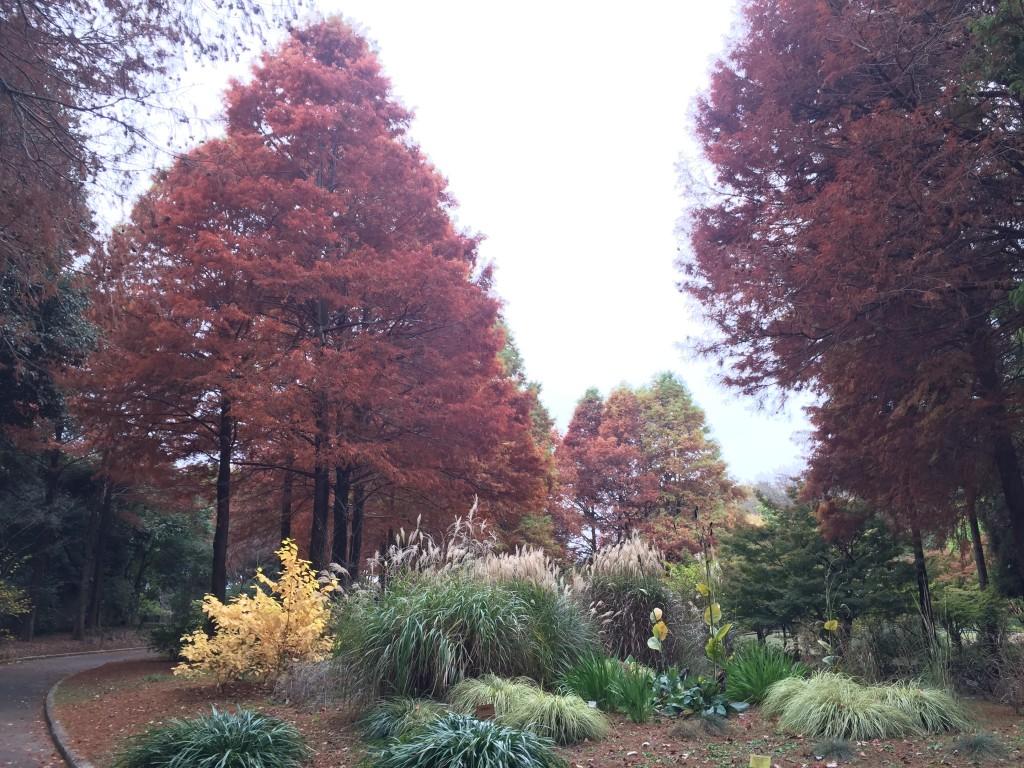 服部緑地植物園の秋_000