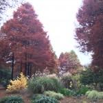 セローでお散歩 大阪の秋(番外編)