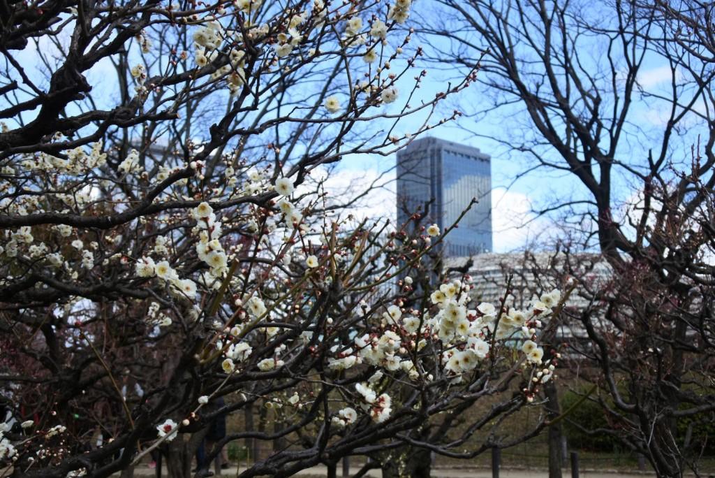 大阪城公園の梅_000