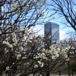 セローでお散歩 大阪城公園の梅