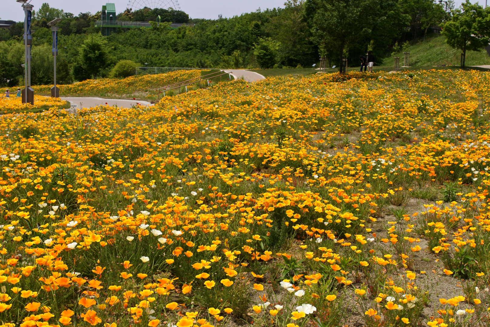 自転車でお散歩 5月の花 その2