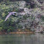 望遠で撮った水鳥_002