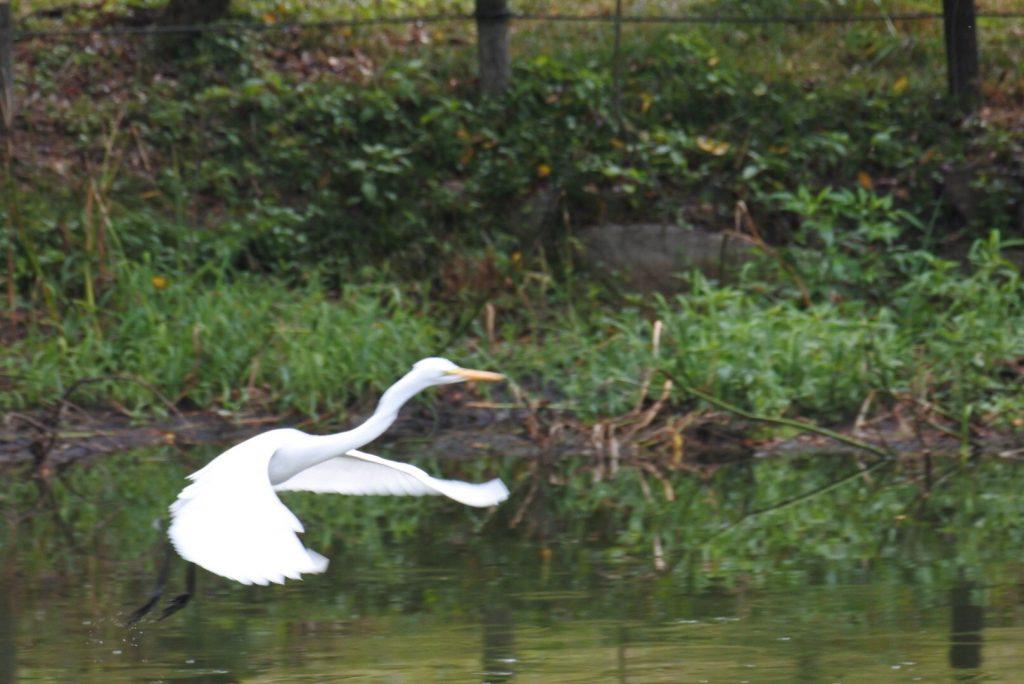 森林公園の水鳥_002