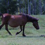 木曽馬の里_002