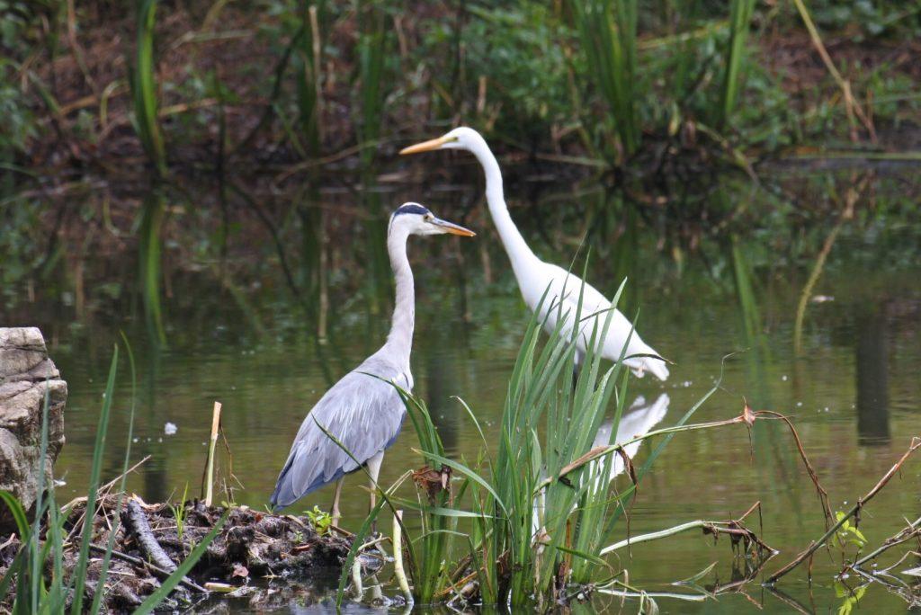 森林公園の水鳥_006