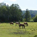 木曽馬の里_006