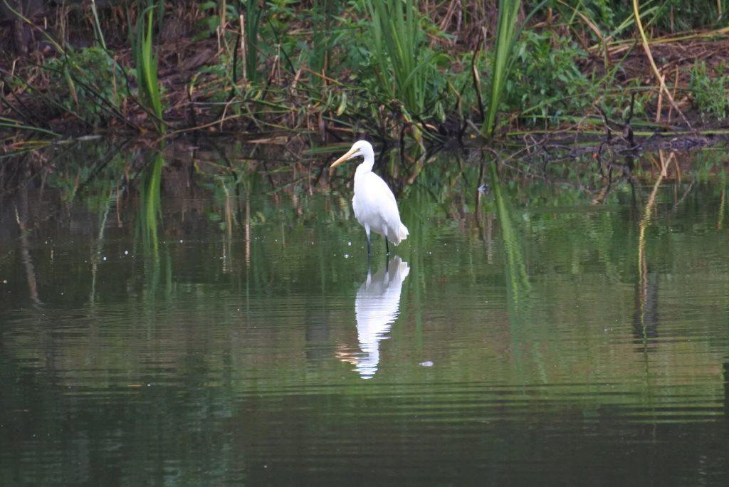 森林公園の水鳥_010