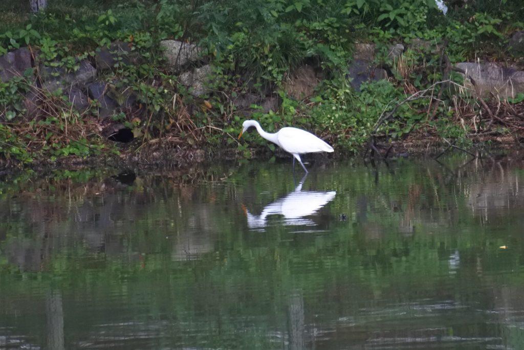 森林公園の水鳥_013