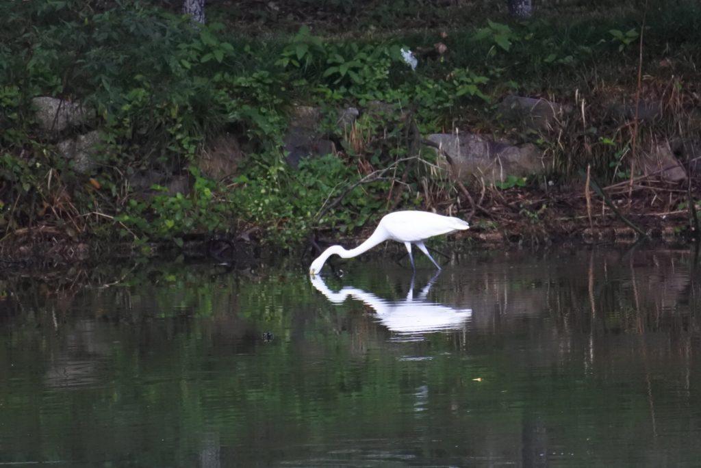 森林公園の水鳥_014