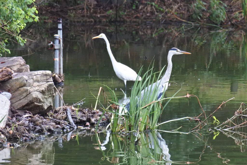 森林公園の水鳥_003