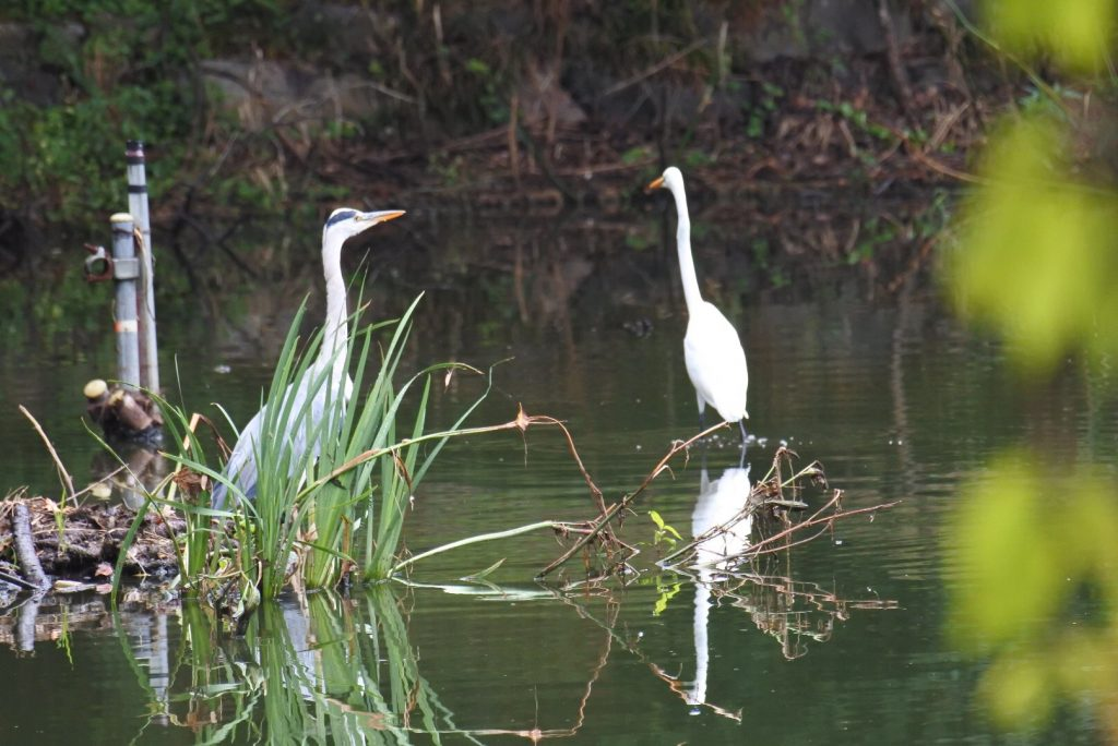 森林公園の水鳥_008