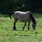 木曽馬の里_004