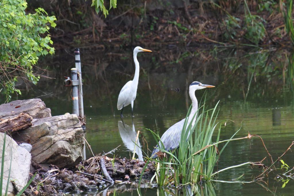 森林公園の水鳥_004