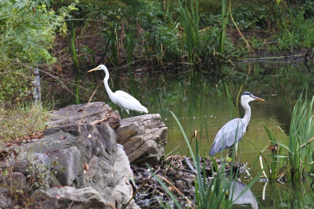 森林公園の水鳥_005