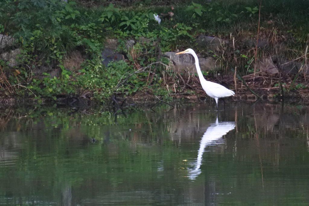 森林公園の水鳥_015