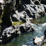 セローでお散歩 飛水峡〜須原のひまわり畑