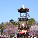 ハスラーでお散歩 犬山の桜
