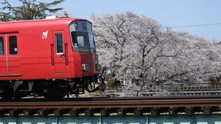 XMAXでお散歩 新境川堤と関川の桜