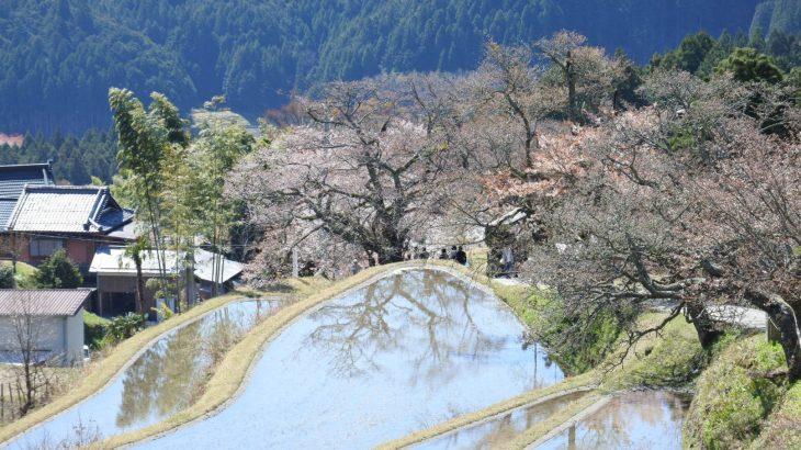 XMAXでお散歩 三多気の桜と青蓮寺湖
