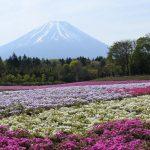 XMAXでお散歩 富士芝桜まつり