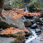 XMAXでお散歩  岩屋堂の紅葉