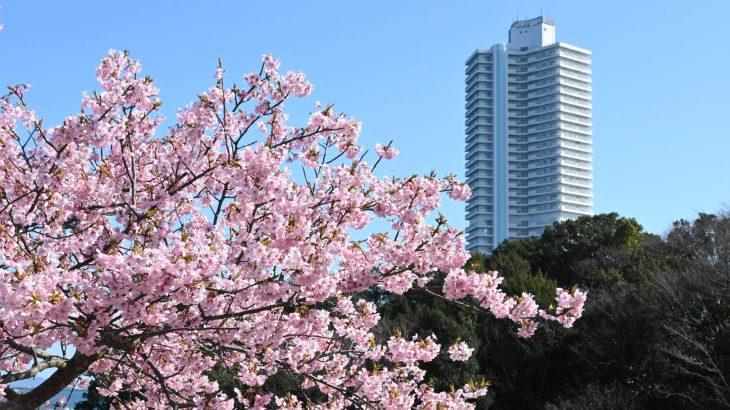 XMAXでお散歩 知多半島の梅と河津桜