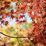 XMAXでお散歩 東山動植物園の紅葉